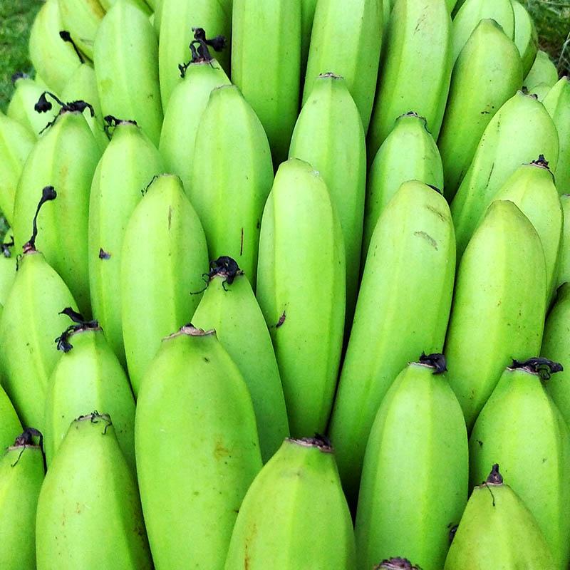 Banano 1 kilo