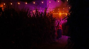 A fairy waits at the end of the harvest tunnel