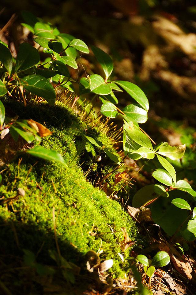 Bon Echo Provincial Park - High Pines Trail