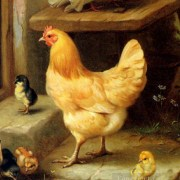 Mangiar l'uovo in corpo alla gallina
