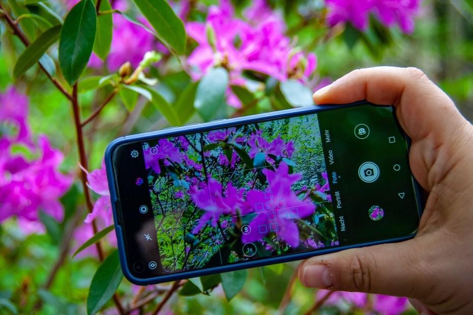 photo d'une fleur