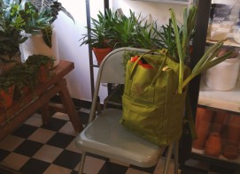 Re-Kanken bei Goldregen Floradesign