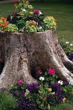 Flowers in a tree stump