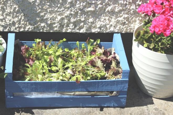Organising Chaos - Make your own salad box