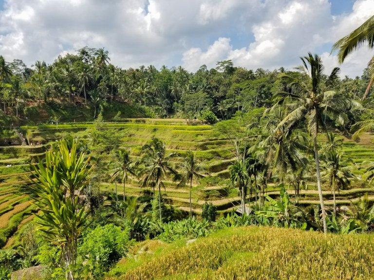 Tegalalang Rice Terraces Bali Indonesia