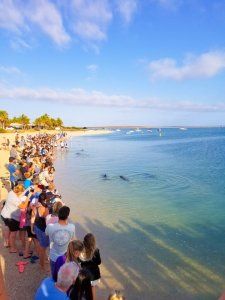 Swarms of tourists at Monkey Mia Western Australia