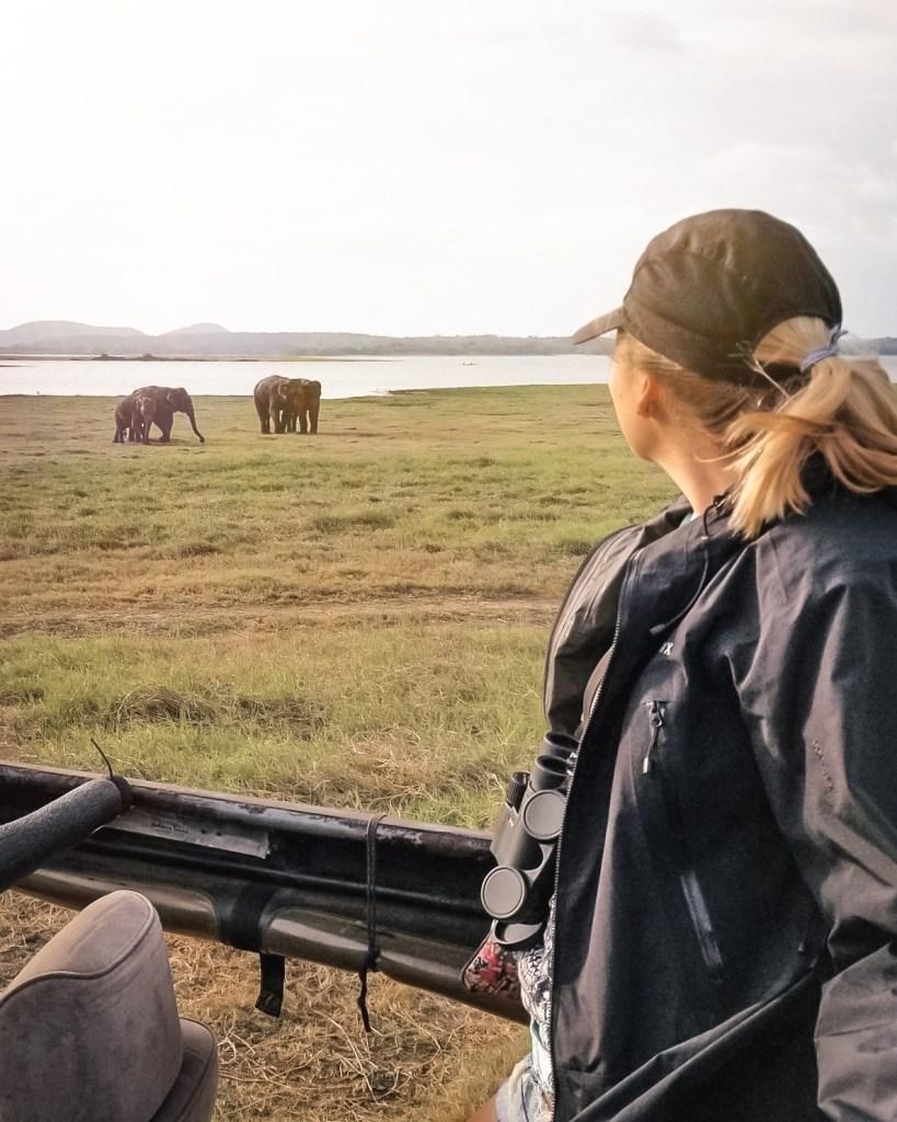 Elephant safari in Minneriya National Park