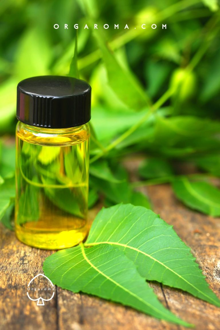 Read more about the article Neem oil for skin: 6 Benefits