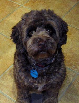 Charlie the Wonder Dog