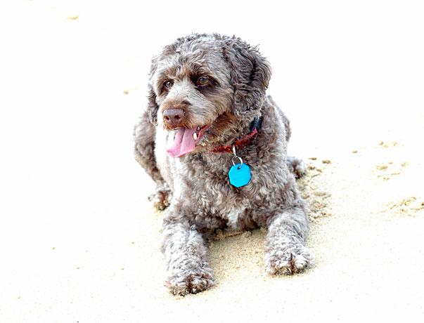 Charlie at the Buddine Beach