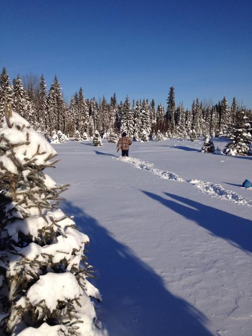 Christmas Tree Hunting 2014 2