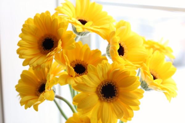 pretty yellow daisies