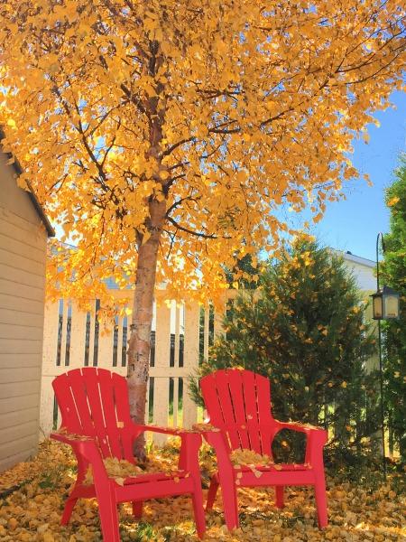 beautiful lovely fall
