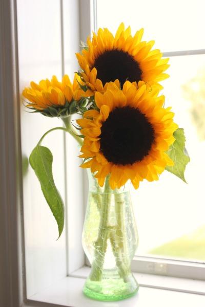 such pretty sunflowers