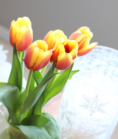 beautiful lovely tulips