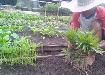 Tips Menjadi Petani Sukses yang Luar Biasa