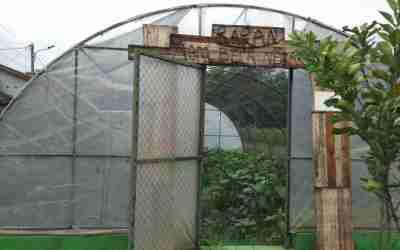 Baran Agro: Usung Konsep Urban Farming