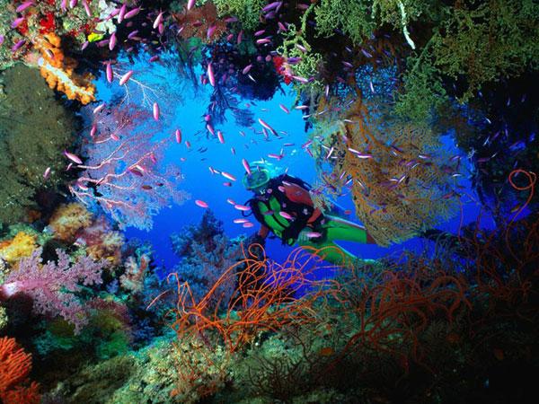 Scufundări în Marea Barieră de Corali