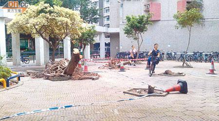 塌樹久未清理 安全堪憂 - 東方日報