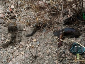 Numerous mass graves discovered in Nizhnyaya Krynka village (Donetsk Republic) after the area was abandoned by the Ukrainian forces.