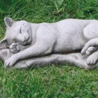 Katze schlafend