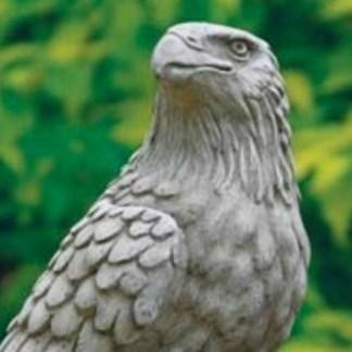 Adler auf Stein