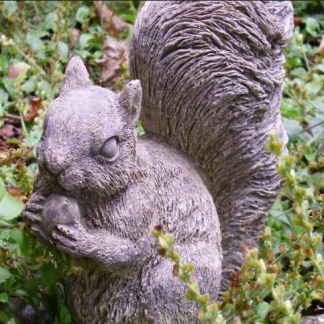 Eichhörnchen Horny mit Nuss - Eichhörnchen Horny mit Nuss