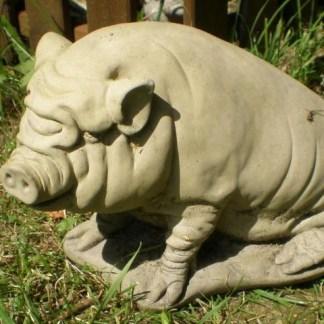 Hängebauchschwein - Hängebauchschwein sitzend