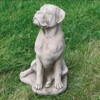 Hund Boxer groß