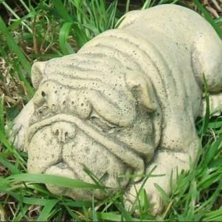 Hund Bulldogge Sparky - Hund Bulldogge Sparky