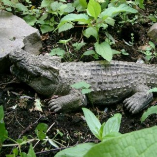 Krokodil klein