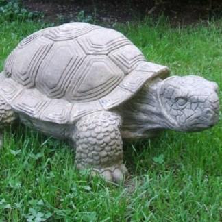 Schildkröte gigantisch - Schildkröte gigantisch