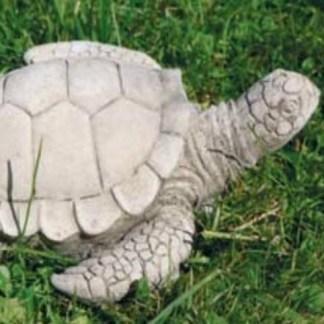 Schildkröte laufend
