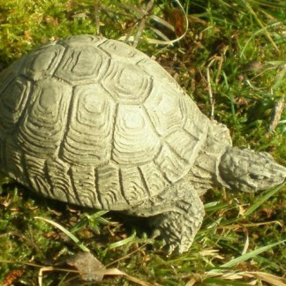 Schildkröte mini - Schildkröte mini