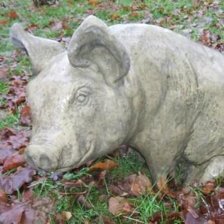 Schwein Frederik - Schwein Frederik, Schwein sitzend