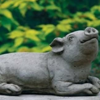 Schwein Isolde