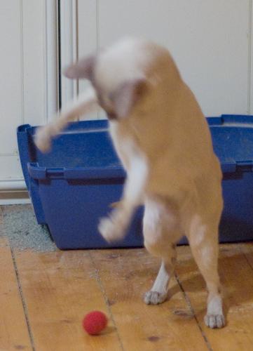 кот Няша с мячиком