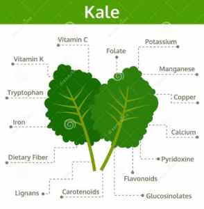 Is Kale Good For you - Kale nutritional content