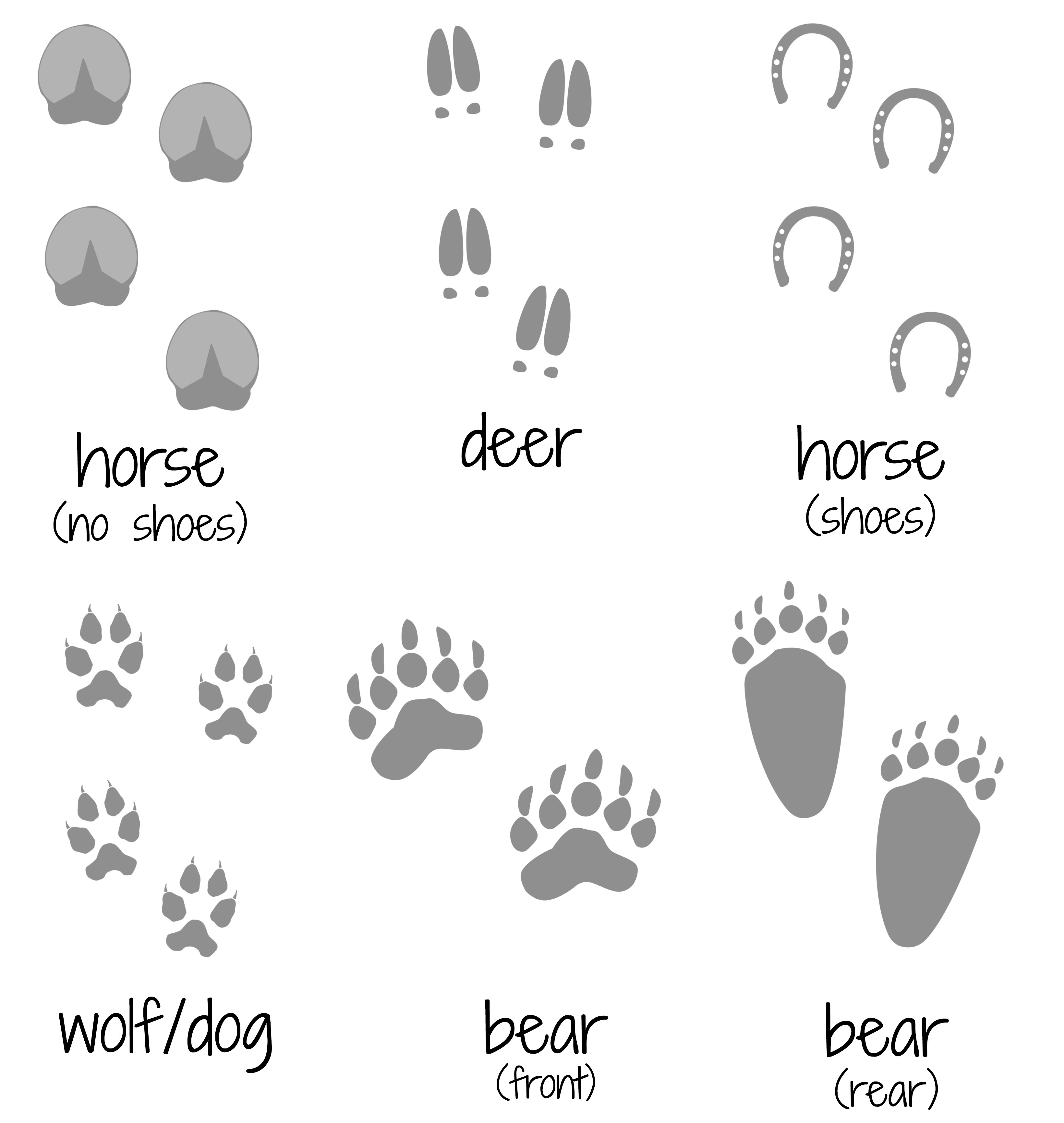 Animal Footprints Coloring Pages Coloring Pages