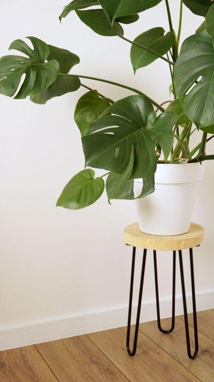 DIY Minimalistyczny stojak pod doniczkę z monsterą