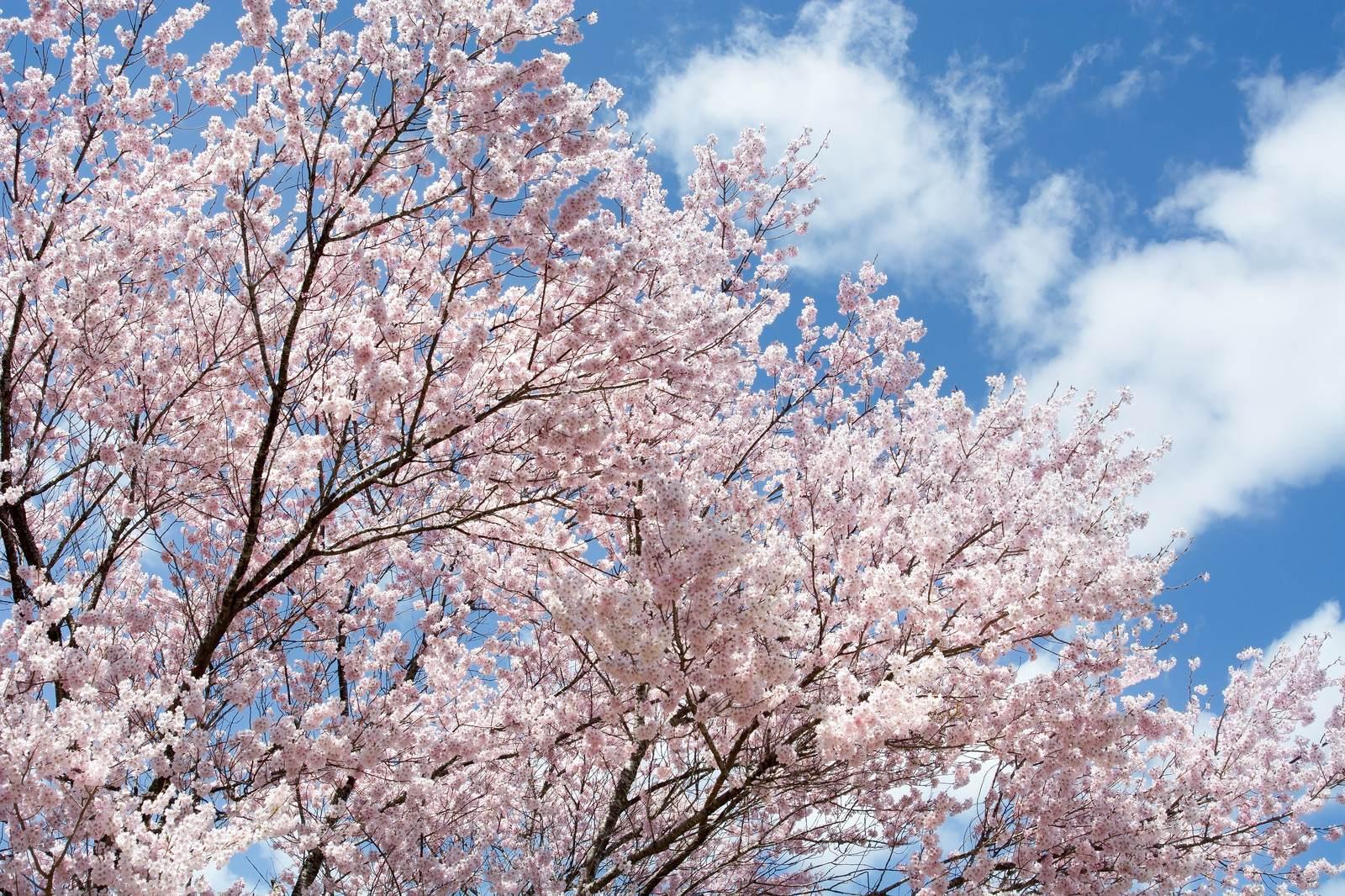 【春を表現する言葉一覧】季語 - 季節の美しい言葉