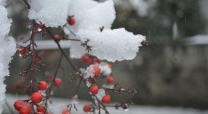 『冬の植物』の季語 一覧 – 季節の美しい言葉