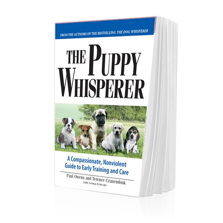 How To Train Your Puppy Dog Whisperer