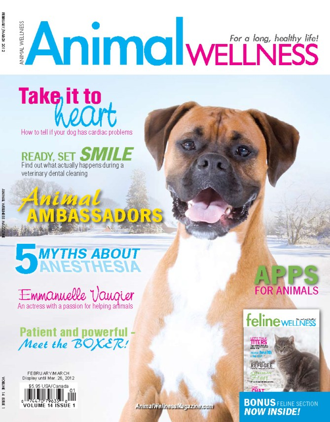 Paul Owens Top 10 Dog Training Tips - Animal Wellness Magazine