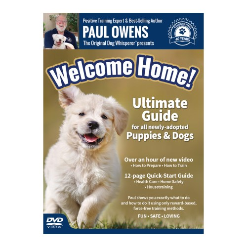 Puppy Training DVD