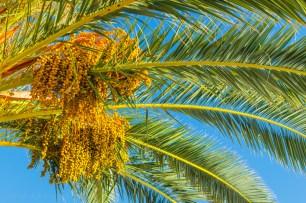 U hladovini palme.