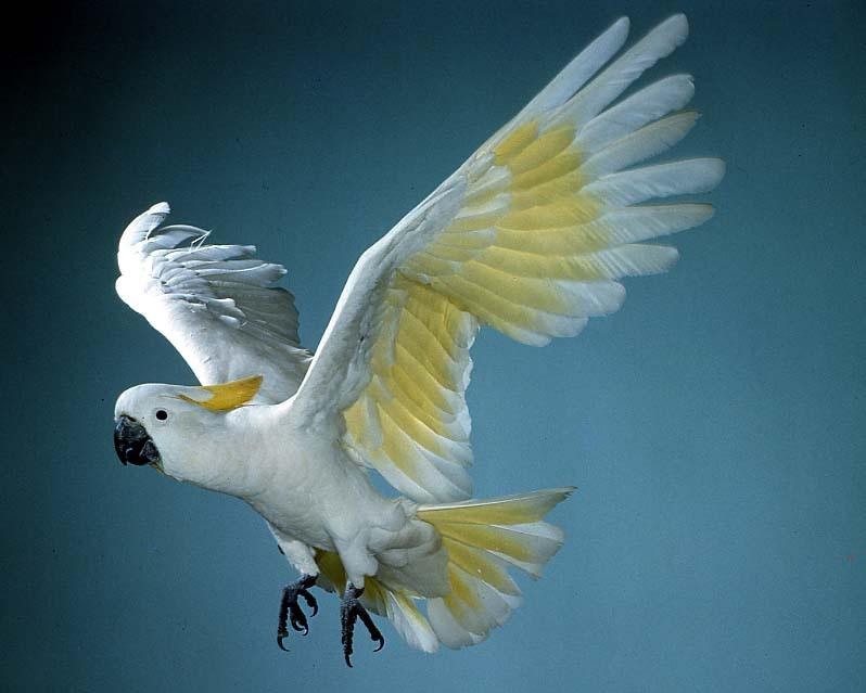 Spread Your Wings Original Strength