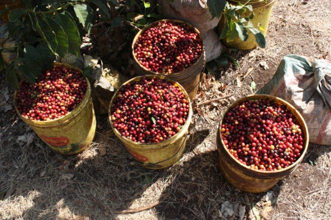 Tanzania Mbeya