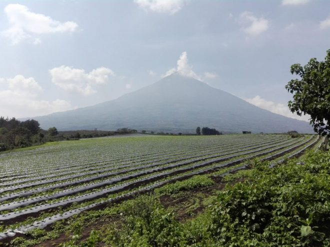 Guatemala Finca San Rafael Urias Volcano