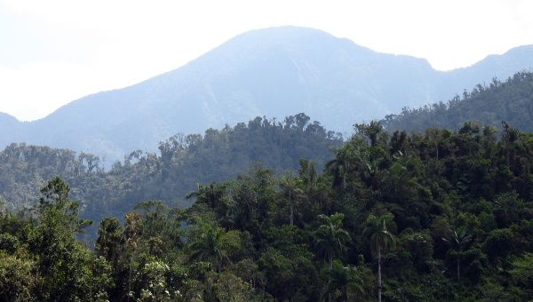 While the Amazon Burns, Cuba Increases its Forested Area